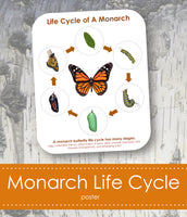 Monarch Life Cycle Poster