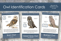 Owl Identification Cards