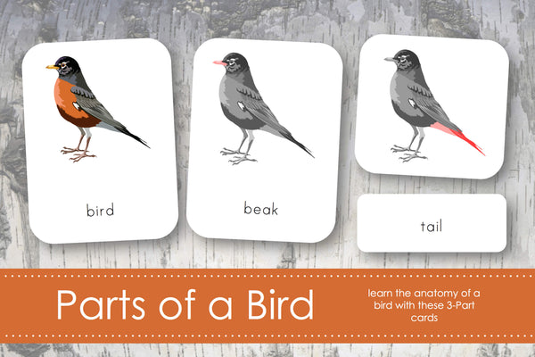 Parts of A Bird 3-Part Cards
