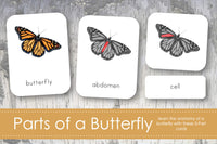 Parts of a Butterfly 3-Part Cards