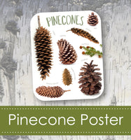 Pinecone Art Poster