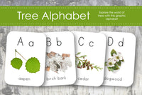 Tree Alphabet Flash Cards