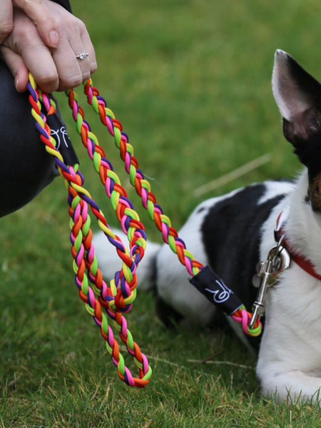 Whinny Reins Dog Lead