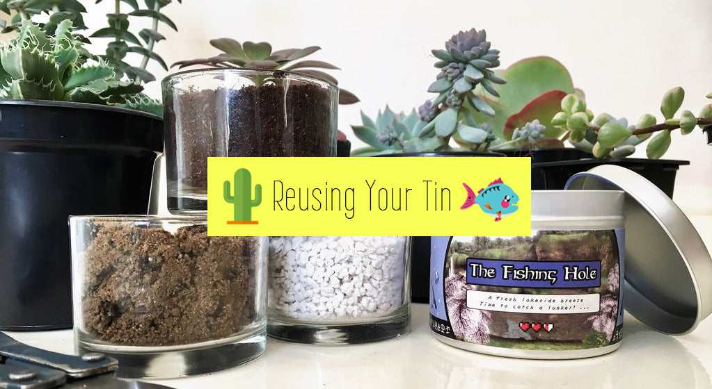 How to Plant Cacti & Succulents & Reuse Your Happy Piranha Candle Tin