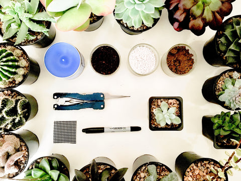 How to plant cacti and succulents tools list | Happy Piranha