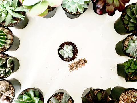 Adding gravel to your succulent or cacti | Happy Piranha.