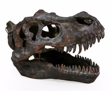 T Rex skull ornament | Happy Piranha