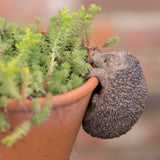 Hedgehog Flower Pot Hanger on a terracotta pot | Happy Piranha