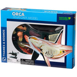 Orca Anatomy - 3D Anatomical Model in Packaging | Happy Piranha