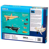 Orca Anatomy - 3D Anatomical Model in Packaging Back of Box | Happy Piranha