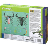 Scorpion Anatomy - 3D Anatomical Model in Packaging Back of Box | Happy Piranha