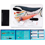 Great White Shark Anatomy - 3D Anatomical Model Box Contents | Happy Piranha