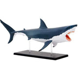 Great White Shark Anatomy - 3D Anatomical Model Side Profile | Happy Piranha