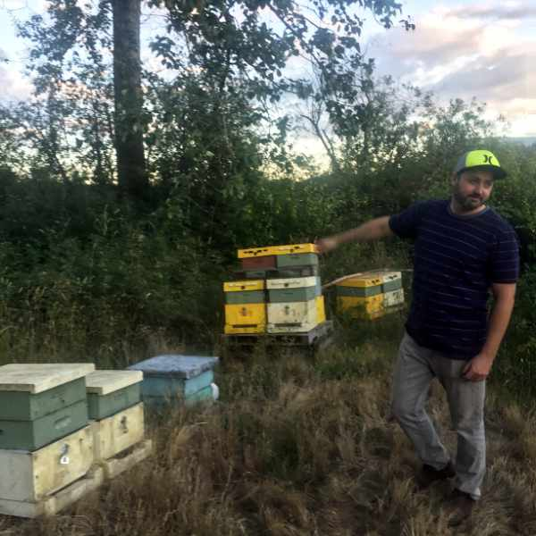 beehives-man-checking-inspection