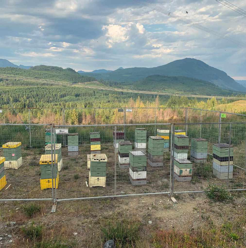 Beehives behind protective fence