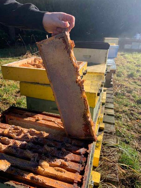 Capped honeycomb beekeeping