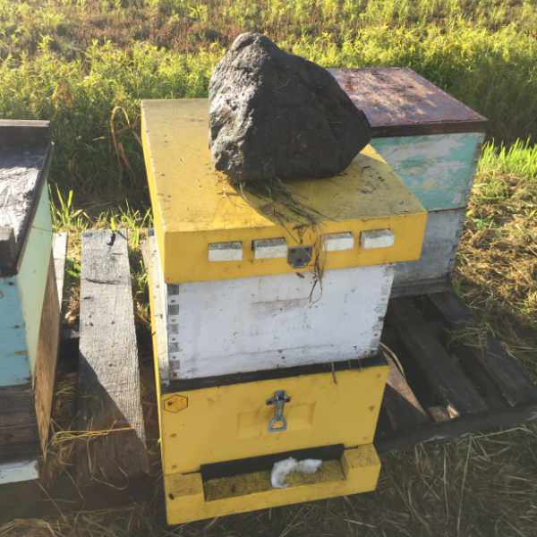 Beehive-wintering-check