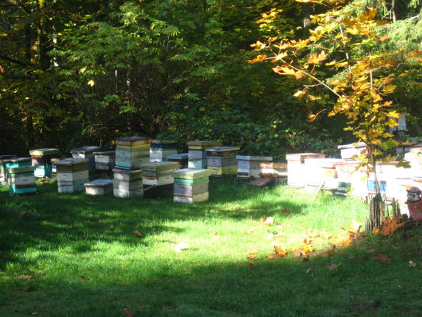 Beekeeping ecology natural environment