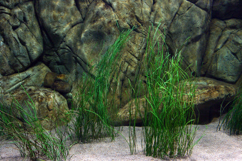 fake seagrass synthetic sea grass pangea america eelgrass turtlegrass surfgrass fake coral artificial seagrass kelp algae