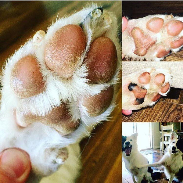Fresh 'Peppermint' Paw Cream-Lightning Soft Paws