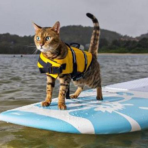 Life Jackets for Cats & Dogs