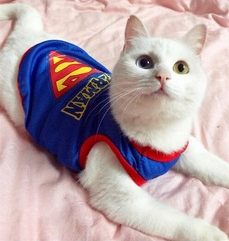 Cat of Steel Superman Cape