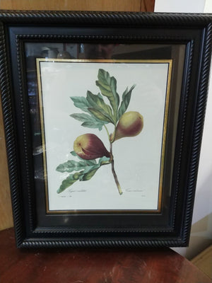 Framed Print by P.J. Redoute published in 1827 Figue violette