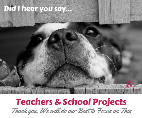 Teachers & School Projects