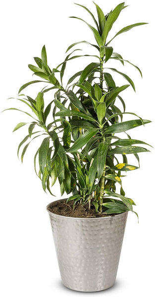 Monarch Abode Hand Hammered Pewter Garden Pot Planter Outdoors > Garden > Planters Monarch Abode