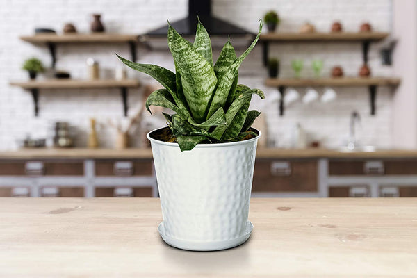 Monarch Abode Hand Hammered Flower Succulent Pots Planter with Drainage Hole, Classic White Home Decor > Planters Monarch Abode
