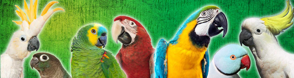 Birds and Parrots Store | Birds for sale - Exotic birds for sale