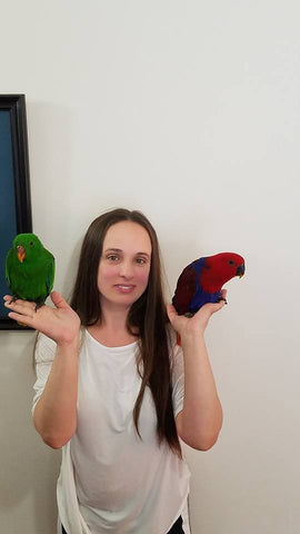 Eclectus Parrots for sale