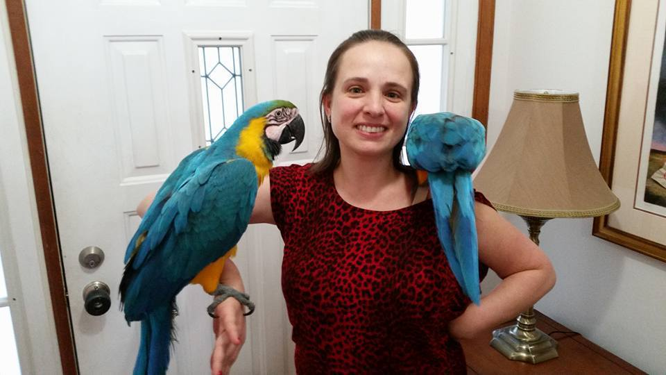 Blue and Gold Macaws for Sale - Macaws and Parrots For sale