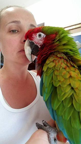 Calico Macaw for sale - Macaws and Parrots For sale