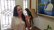 Severe Macaws  for sale - Macaws and Parrots For sale
