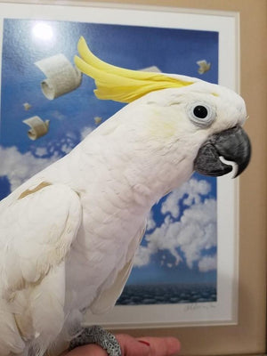 Sulpher Crested Cockatoos for Sale - Macaws and Parrots For sale