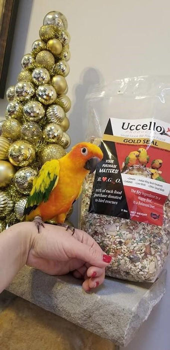 Sun Conure  for sale - Macaws and Parrots For sale
