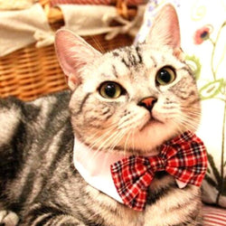 Adjustable Pet Plaid Bow Tie