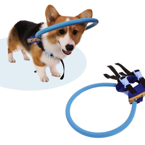 Visually Impaired Pet Safety Halo