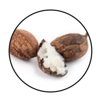 Nut from the African Shea Tree