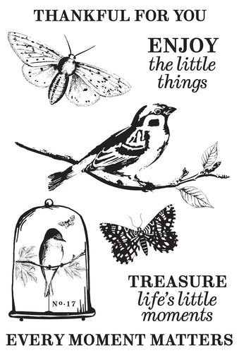 "Anthology Clear Stamps 6""X4"""