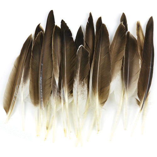 Duck Wing Quill Feathers 22/Pkg