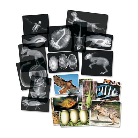Roylco Animal X-Ray Set, 14/Pack