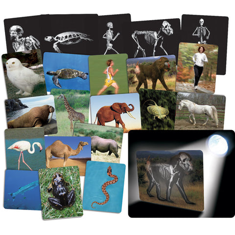 Roylco What™S Inside Animals Card Set