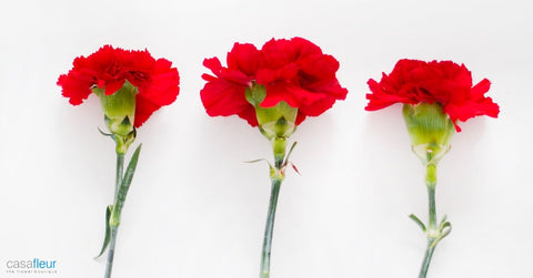 Carnations as wedding flowers