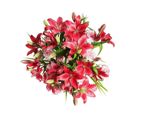 Lillies and Carnations