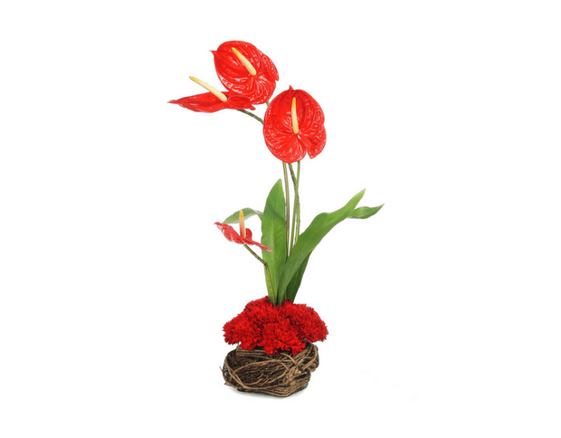 Red Anthuriums & Carnations Arrangement