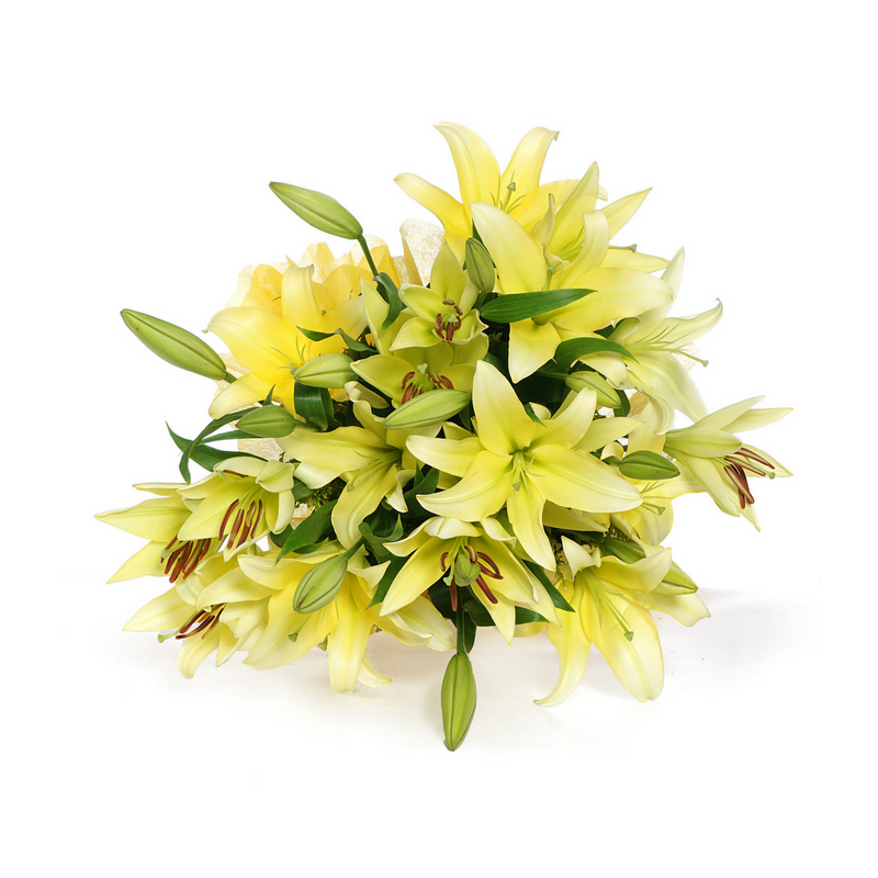 Yellow Oriental Lilies