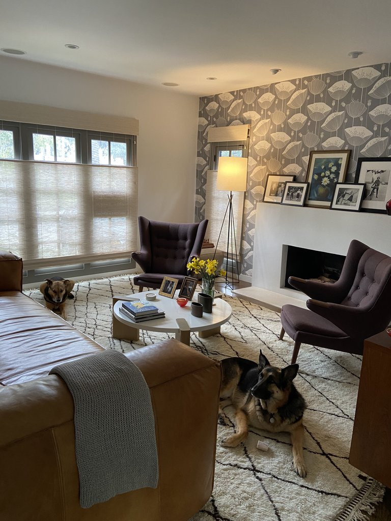 Moroccan rug in living room with a dog
