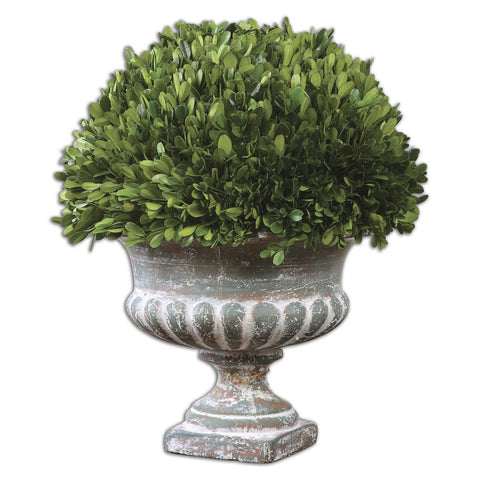 Westley Preserved Boxwood